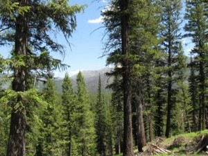 Big Bear Retreats For Sports Teams And Track Clubs
